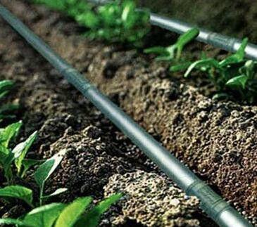 汕尾陆丰专用滴灌微喷主管毛管农用灌溉管