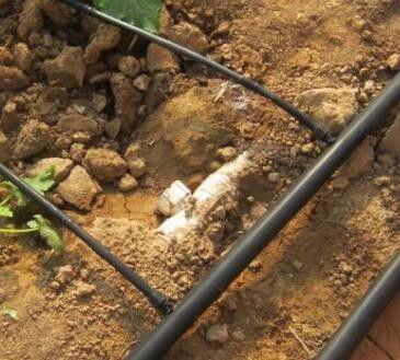 温州乐清专用滴灌微喷主管毛管农用灌溉管