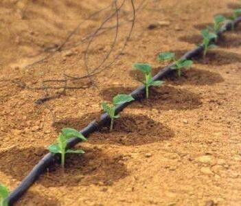 温州瓯海区农用滴灌毛管三通