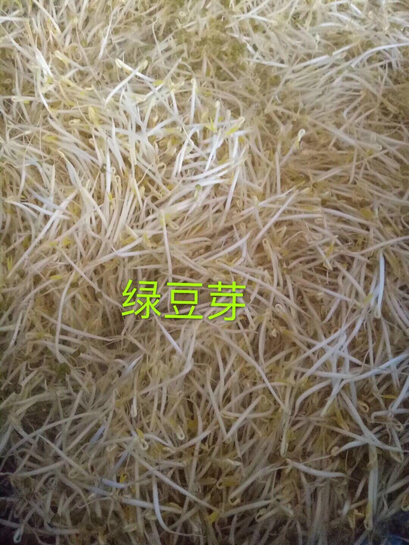 新疆维吾尔自治区哈密地区伊吾县豆芽机的消