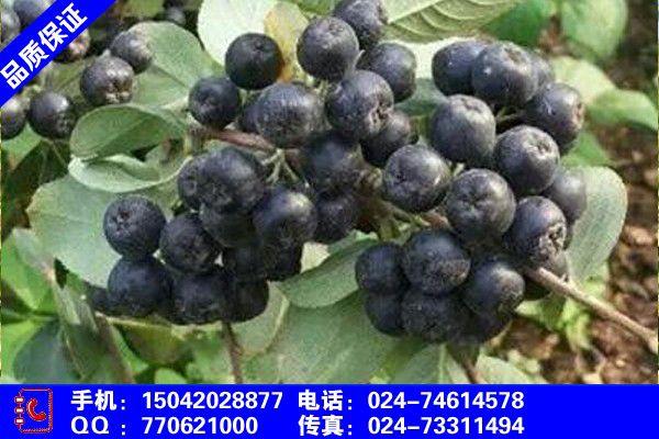 陕西省榆林市府谷县辽东栎果子能吃吗