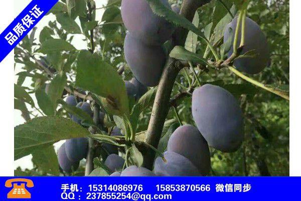 临沂郯城甜宝草莓苗怎么样报价表