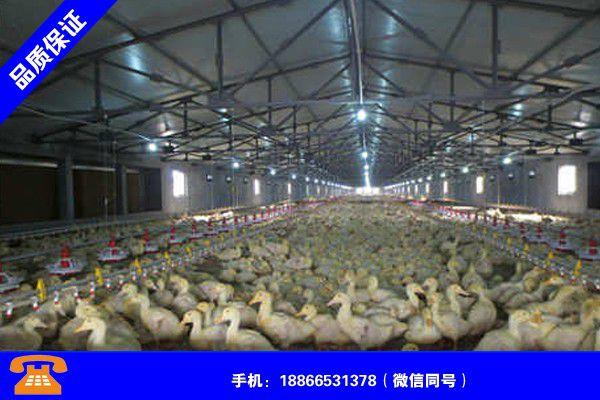 扬州宝应怎么建鸭棚品牌好吗