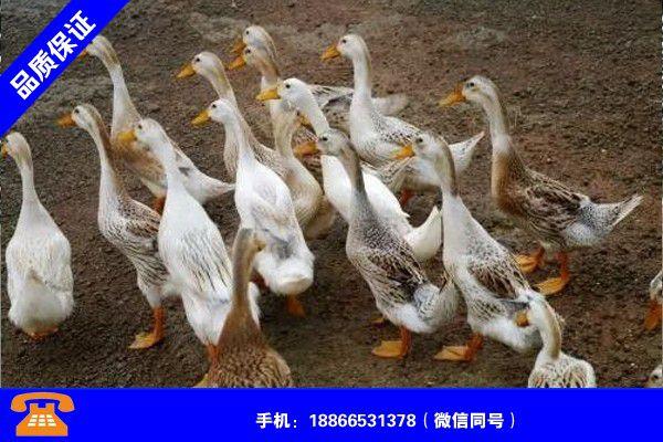 南阳镇平建鸭棚怎么样质量