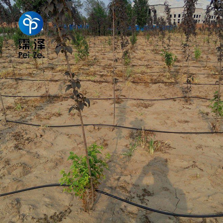 常州葡萄滴灌