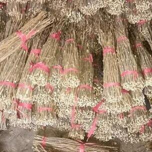 蔡甸区人工怎样养殖金蝉